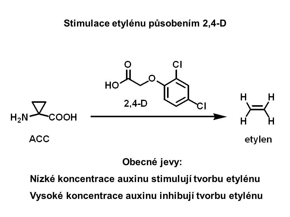 Stimulace etylénu působením 2,4-D