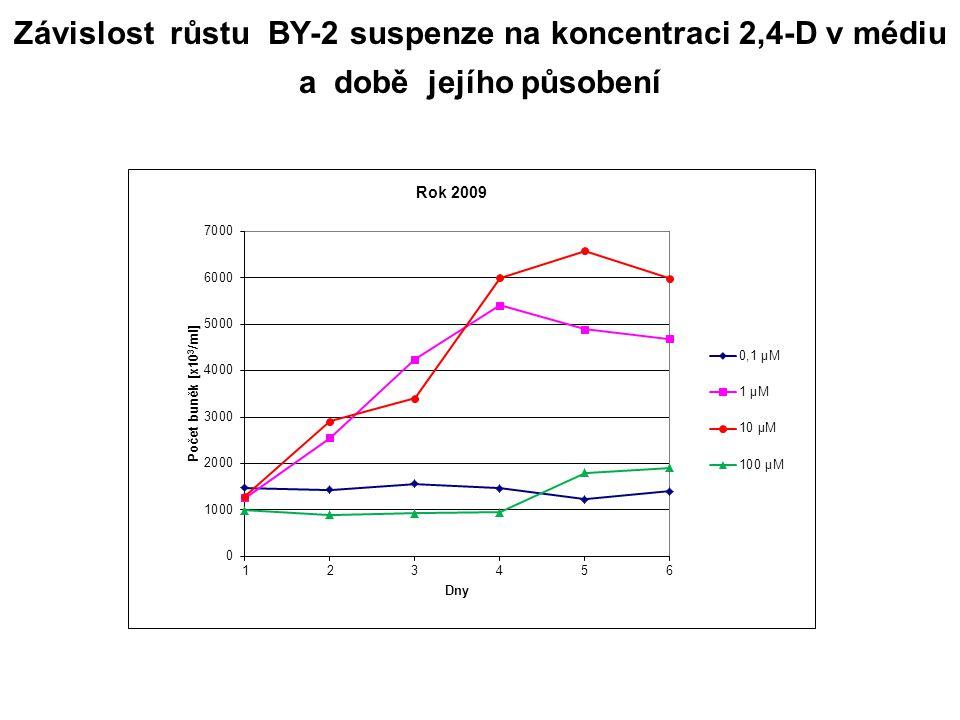 Závislost růstu BY-2 suspenze na koncentraci 2,4-D v médiu a době jejího působení