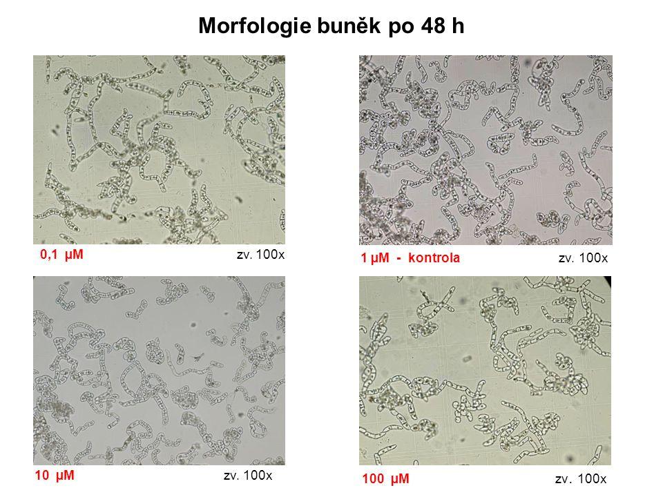 Morfologie buněk po 48 h 0,1 µM zv. 100x 1 µM - kontrola zv. 100x