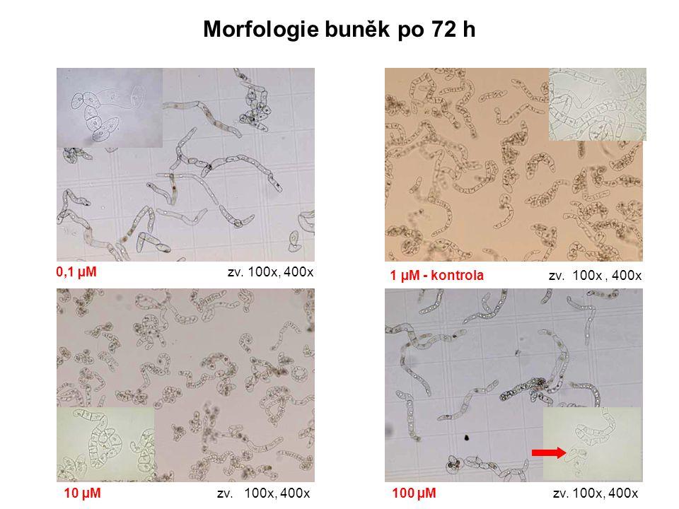 Morfologie buněk po 72 h 0,1 µM zv. 100x, 400x
