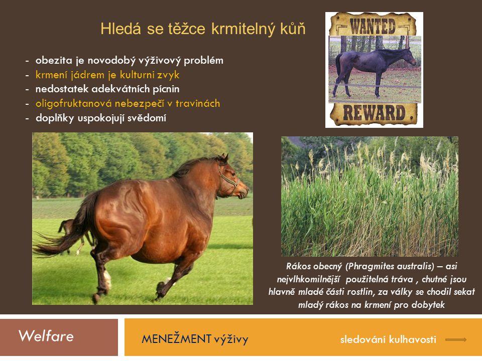 Welfare Hledá se těžce krmitelný kůň MENEŽMENT výživy