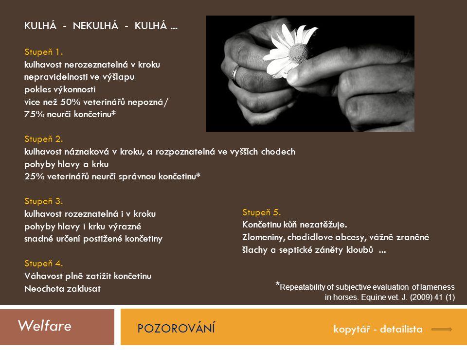 Welfare POZOROVÁNÍ KULHÁ - NEKULHÁ - KULHÁ ...