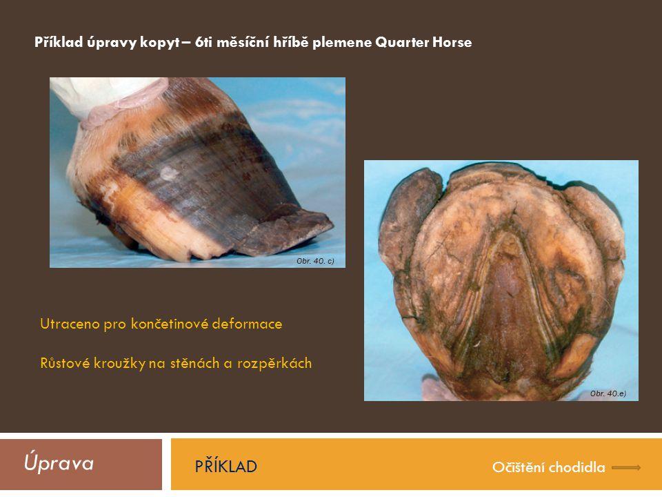 Příklad úpravy kopyt – 6ti měsíční hříbě plemene Quarter Horse