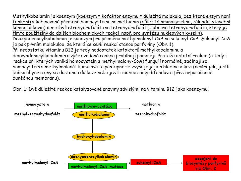 methyl-tetrahydrofolát zapojení do biosyntézy porfyrinů viz Obr. 2