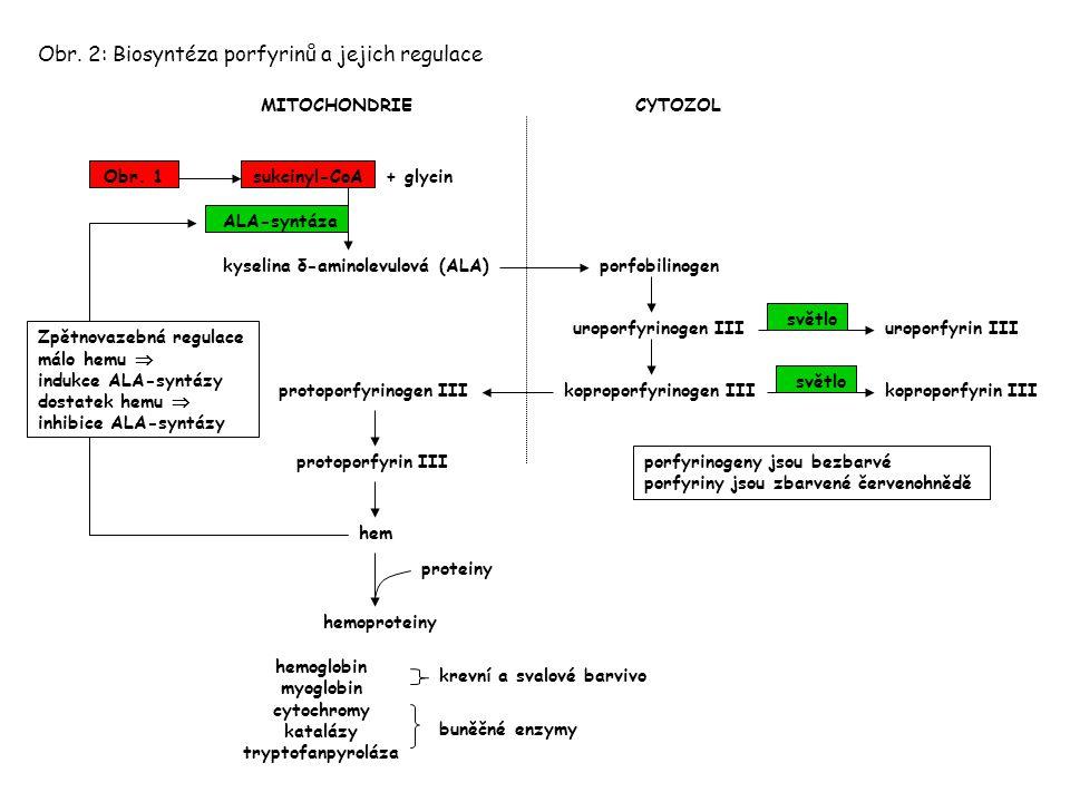 Obr. 2: Biosyntéza porfyrinů a jejich regulace