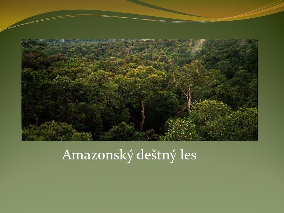 Amazonský deštný les