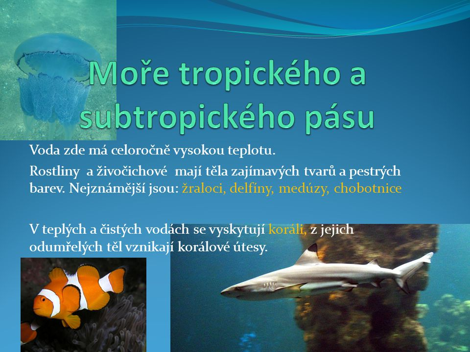 Moře tropického a subtropického pásu