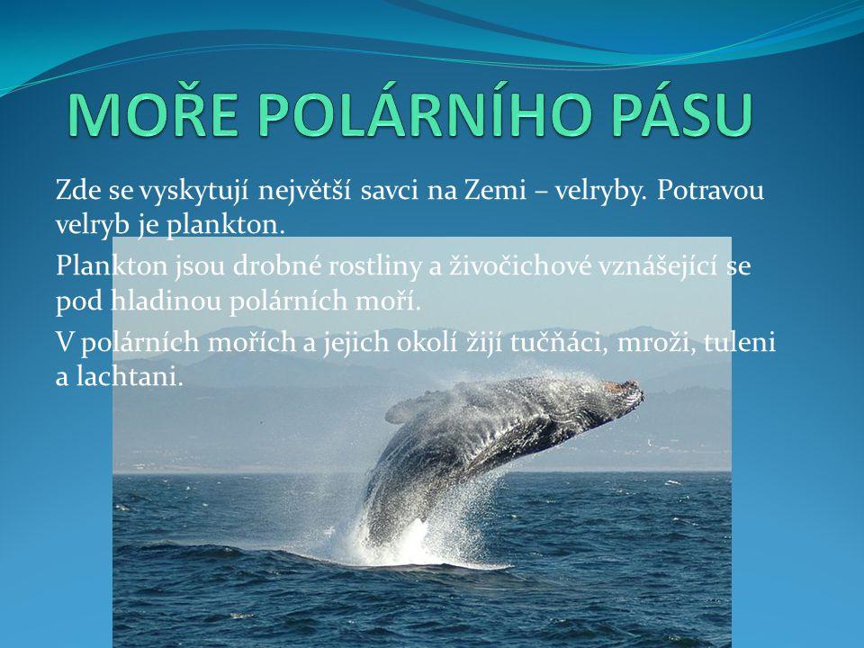 MOŘE POLÁRNÍHO PÁSU Zde se vyskytují největší savci na Zemi – velryby. Potravou velryb je plankton.