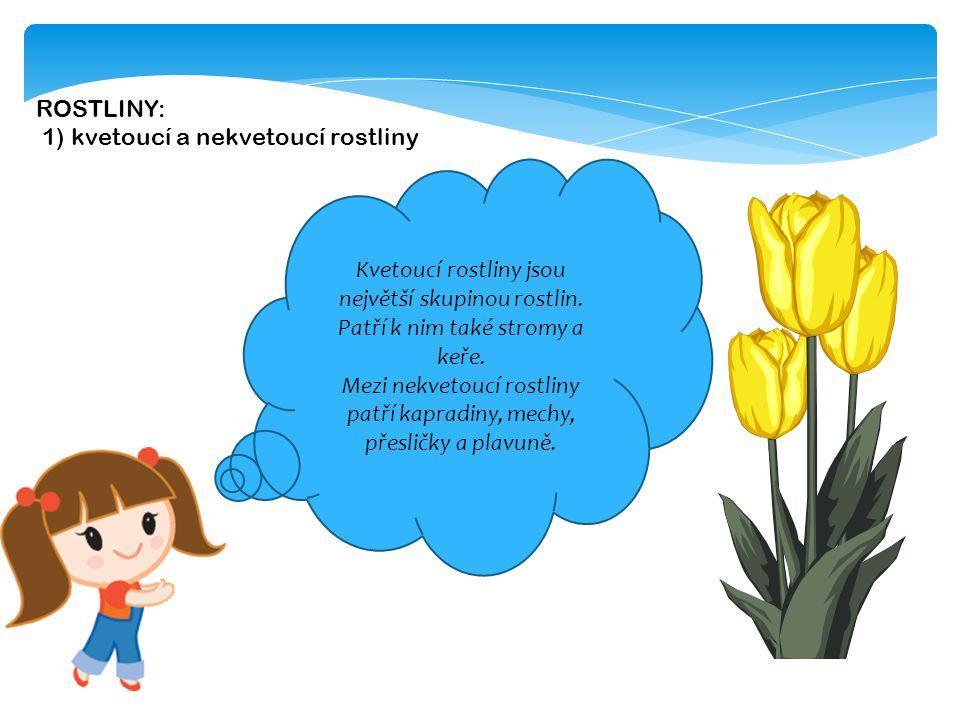Mezi nekvetoucí rostliny patří kapradiny, mechy, přesličky a plavuně.