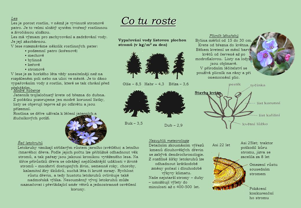 Co tu roste Les. Les je porost rostlin, v němž je vyvinuté stromové patro. Je to velmi složitý systém tvořený rostlinnou a živočišnou složkou.