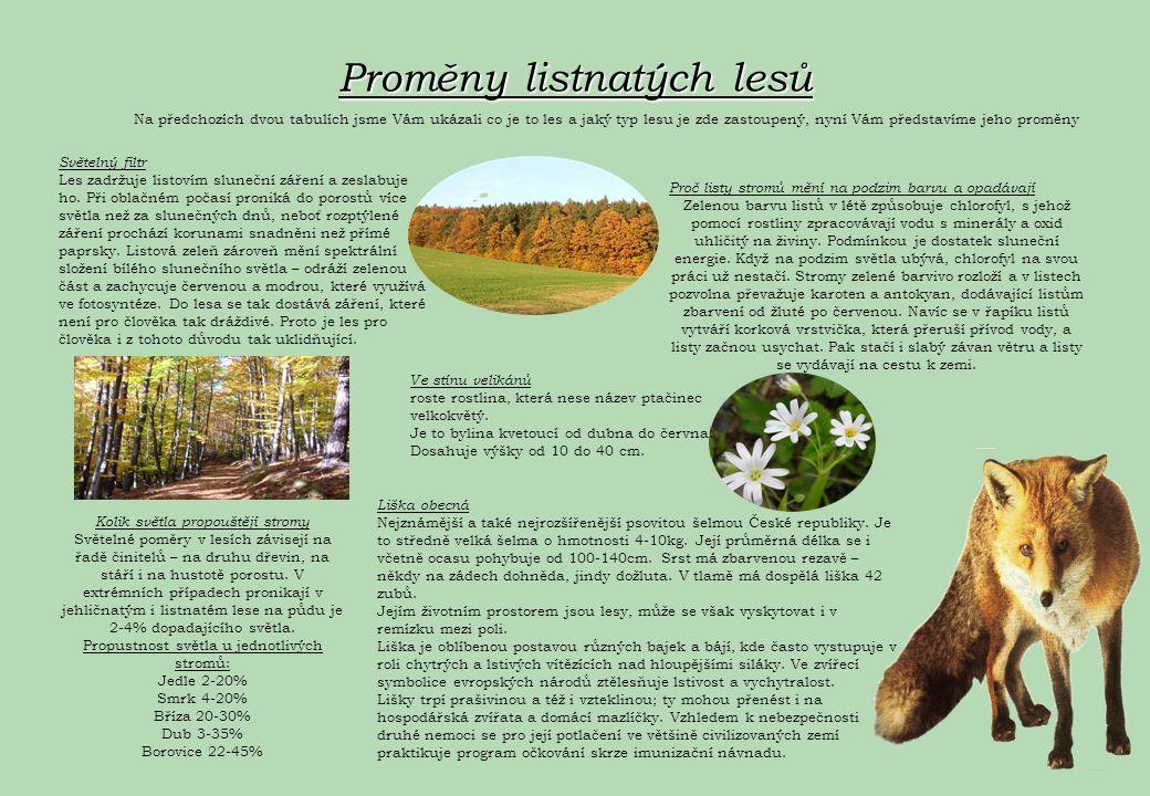 Proměny listnatých lesů