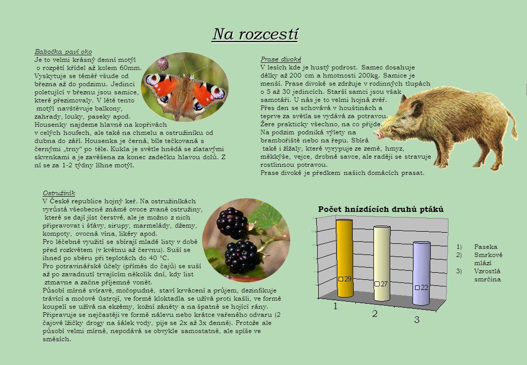Na rozcestí 1 2 3 Počet hnízdících druhů ptáků Babočka paví oko