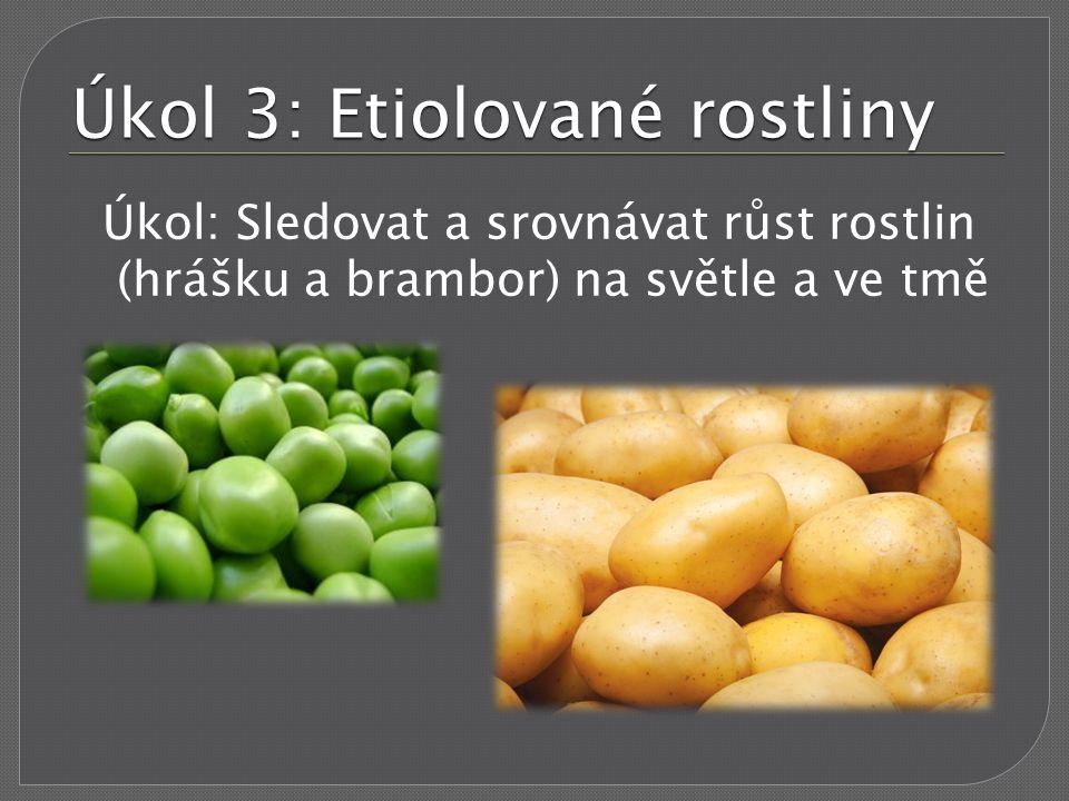 Úkol 3: Etiolované rostliny