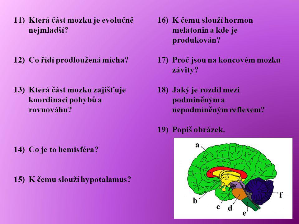 Která část mozku je evolučně nejmladší