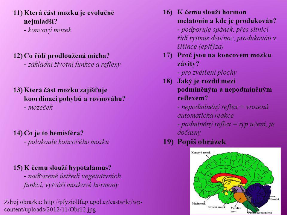 Která část mozku je evolučně nejmladší - koncový mozek
