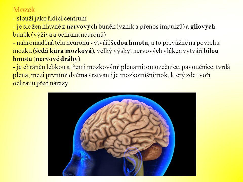 Mozek - slouží jako řídící centrum