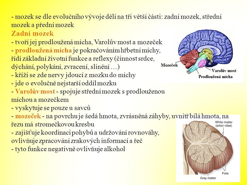 - mozek se dle evolučního vývoje dělí na tři větší části: zadní mozek, střední mozek a přední mozek