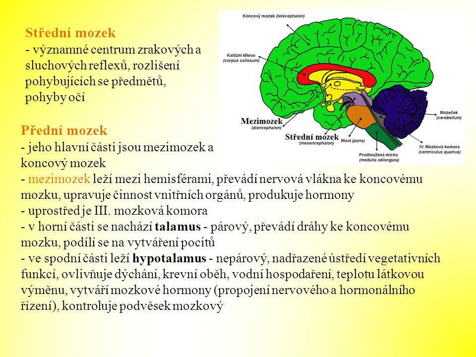 Střední mozek Přední mozek