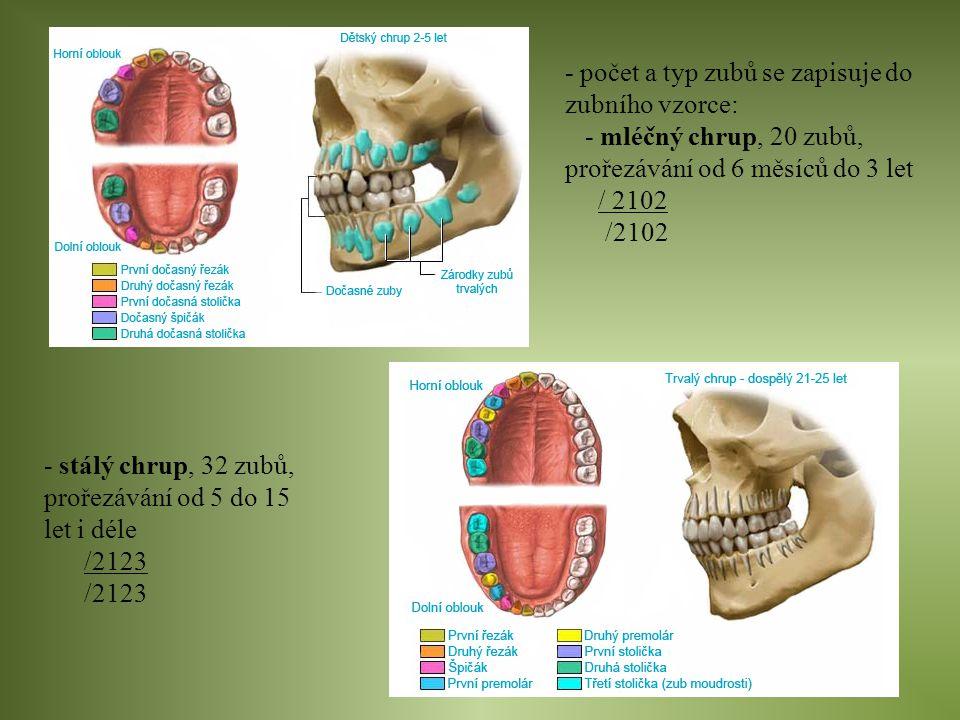 - počet a typ zubů se zapisuje do zubního vzorce: