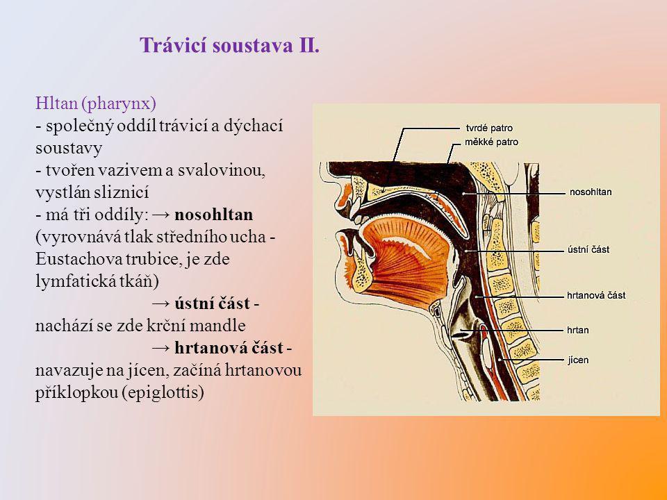 Trávicí soustava II. Hltan (pharynx)
