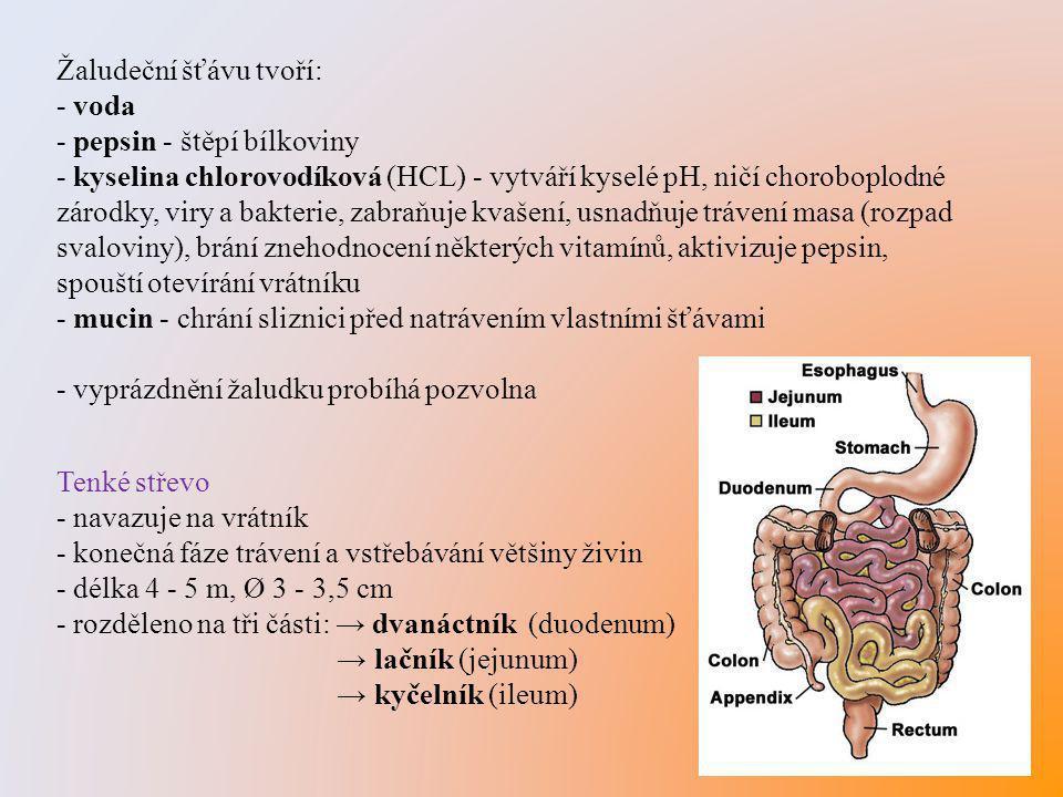 Žaludeční šťávu tvoří: