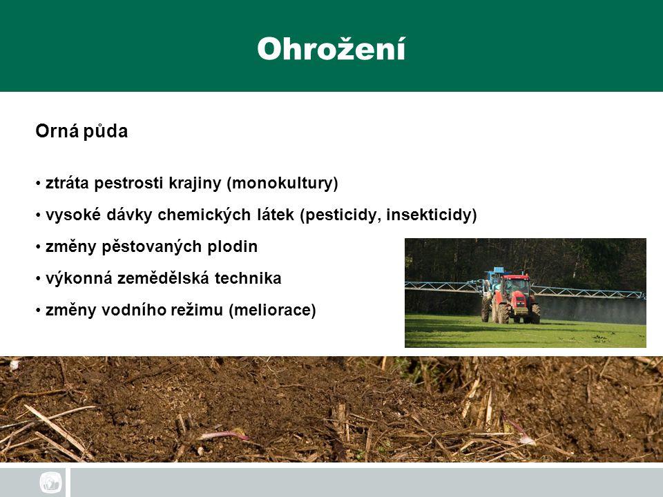 Ohrožení Orná půda ztráta pestrosti krajiny (monokultury)