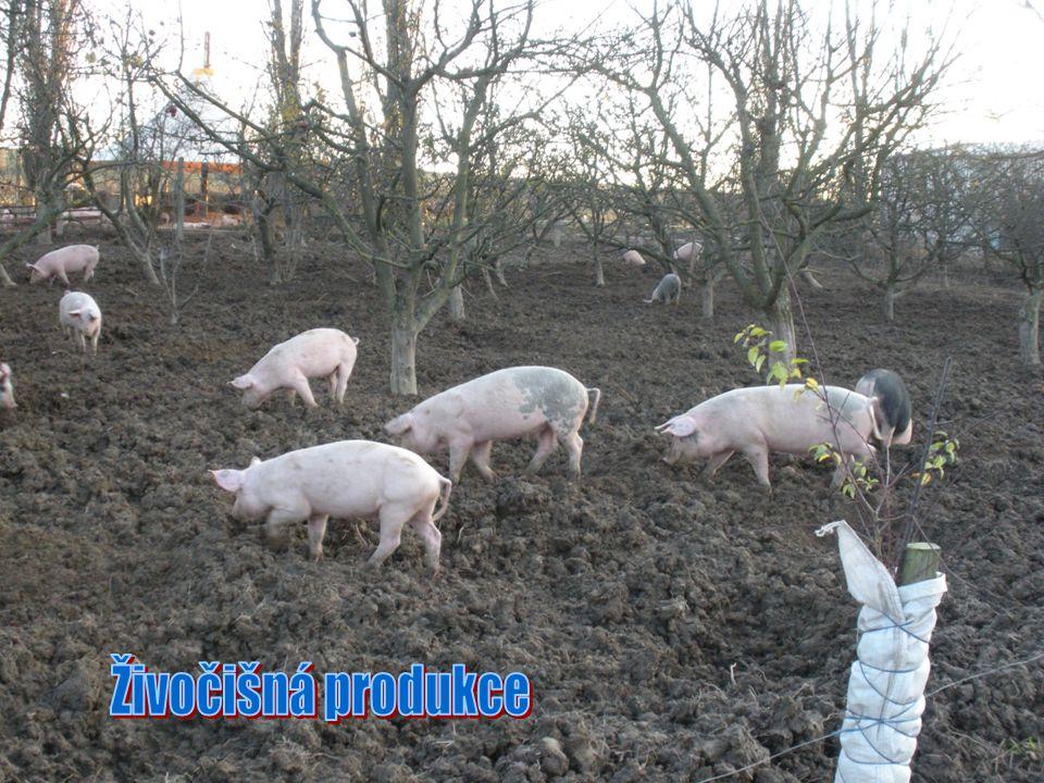 Živočišná produkce