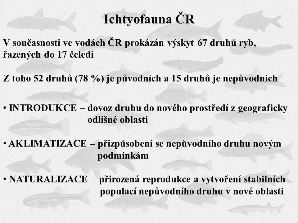 Ichtyofauna ČR V současnosti ve vodách ČR prokázán výskyt 67 druhů ryb, řazených do 17 čeledí.