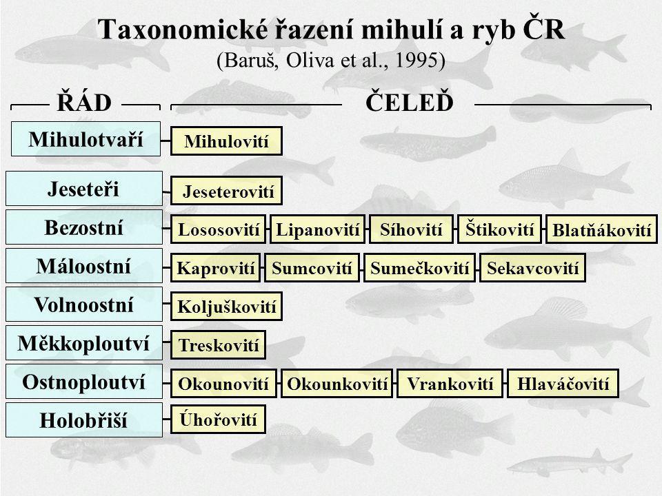 Taxonomické řazení mihulí a ryb ČR (Baruš, Oliva et al., 1995)