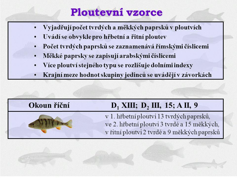 Okoun říční D1 XIII; D2 III, 15; A II, 9
