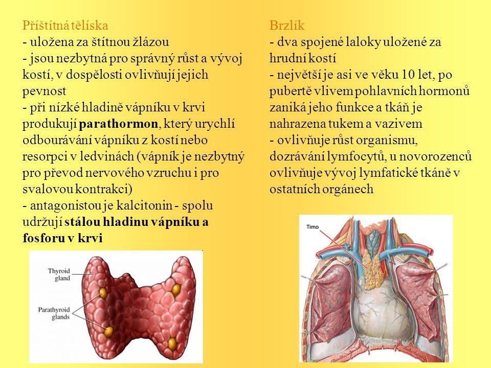 Příštítná tělíska - uložena za štítnou žlázou. - jsou nezbytná pro správný růst a vývoj kostí, v dospělosti ovlivňují jejich pevnost.