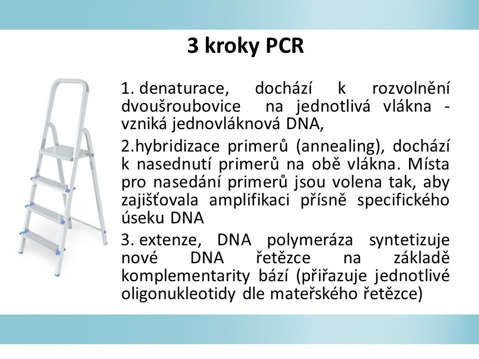 3 kroky PCR denaturace, dochází k rozvolnění dvoušroubovice na jednotlivá vlákna - vzniká jednovláknová DNA,