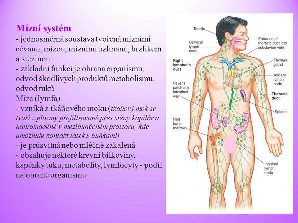 Mízní systém - jednosměrná soustava tvořená mízními cévami, mízou, mízními uzlinami, brzlíkem a slezinou