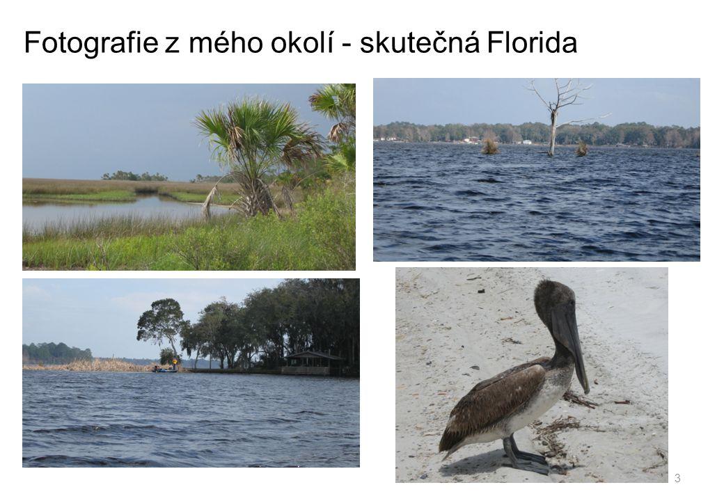 Fotografie z mého okolí - skutečná Florida