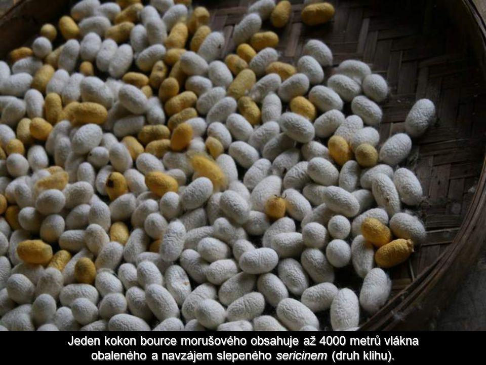 Jeden kokon bource morušového obsahuje až 4000 metrů vlákna