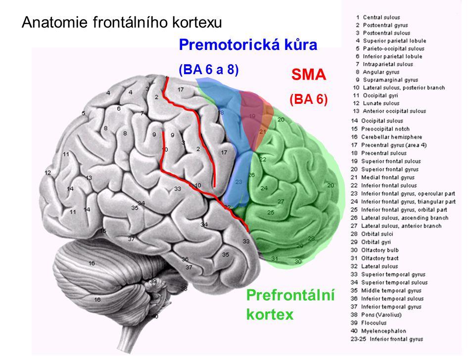 Anatomie frontálního kortexu Premotorická kůra