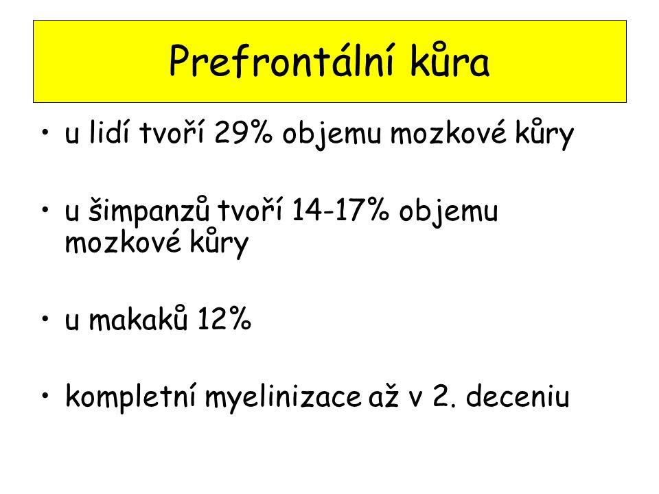 Prefrontální kůra u lidí tvoří 29% objemu mozkové kůry