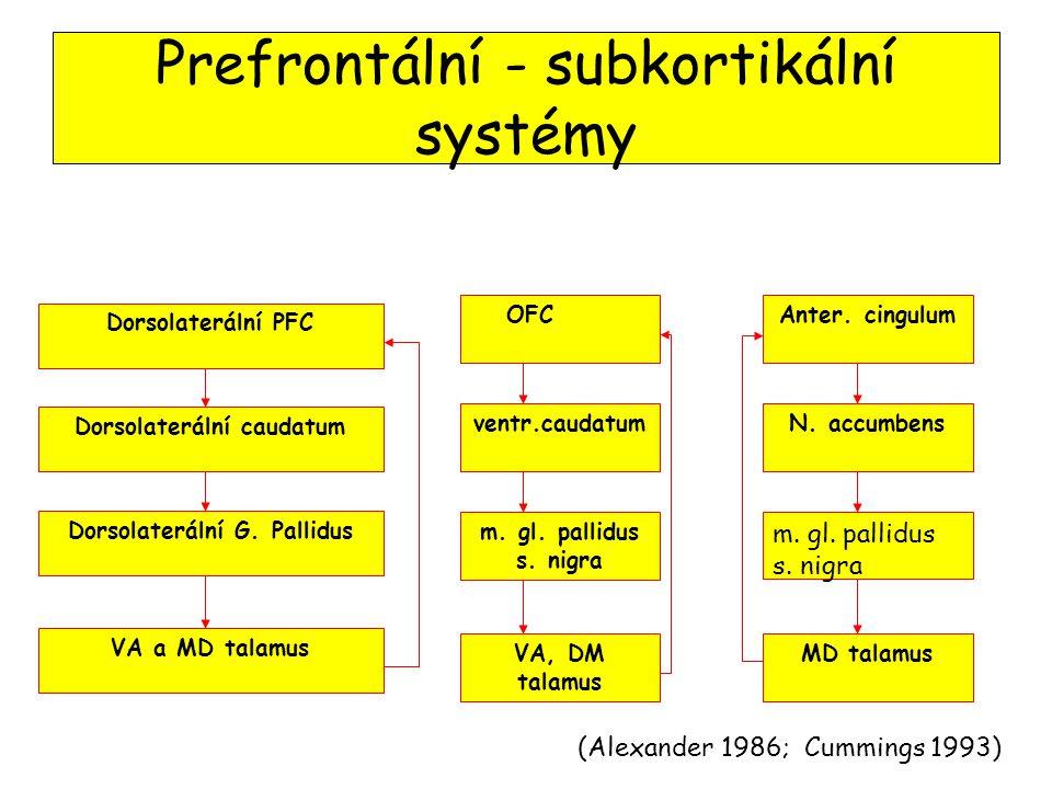 Prefrontální - subkortikální systémy