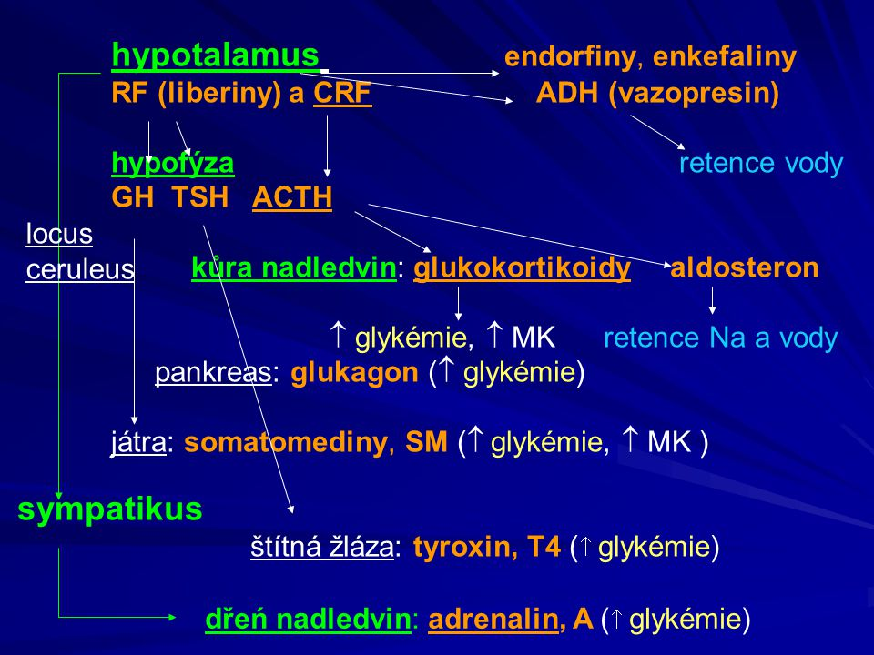 hypotalamus endorfiny, enkefaliny