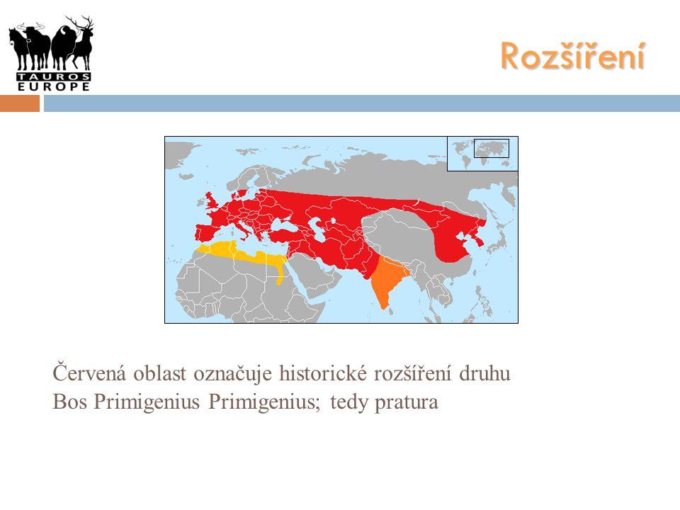 Rozšíření Červená oblast označuje historické rozšíření druhu Bos Primigenius Primigenius; tedy pratura