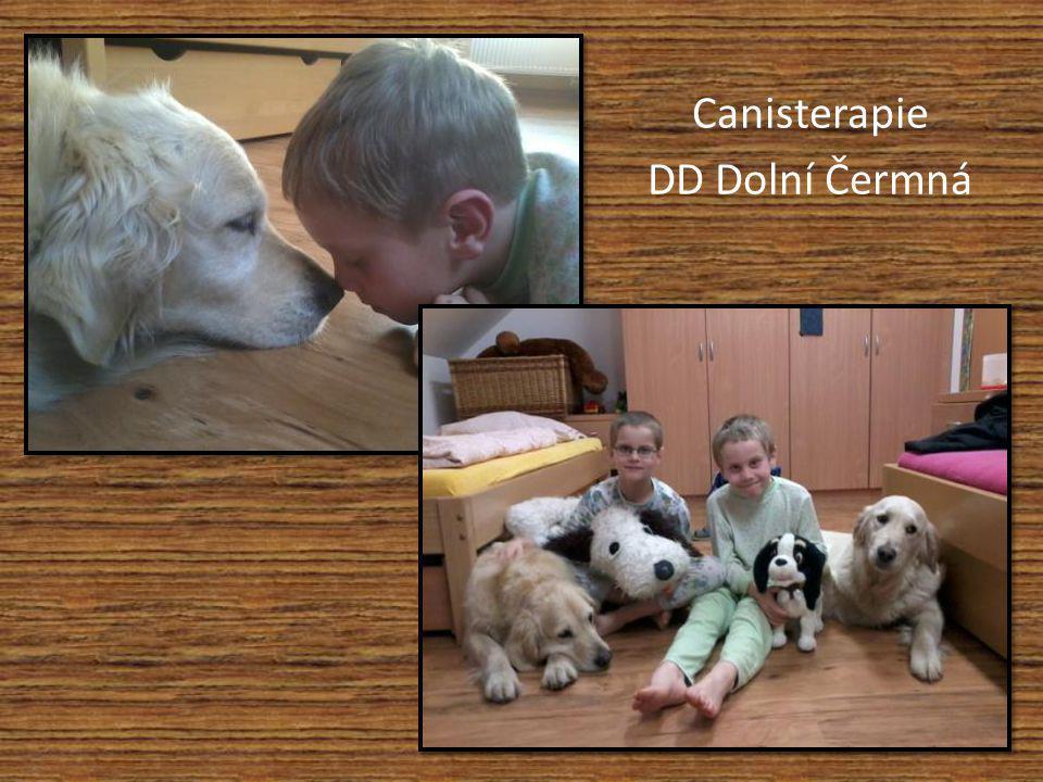 Canisterapie DD Dolní Čermná