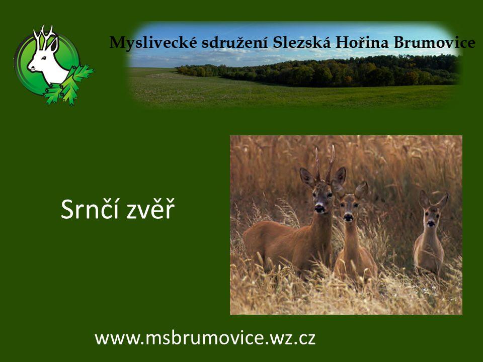 Srnčí zvěř www.msbrumovice.wz.cz