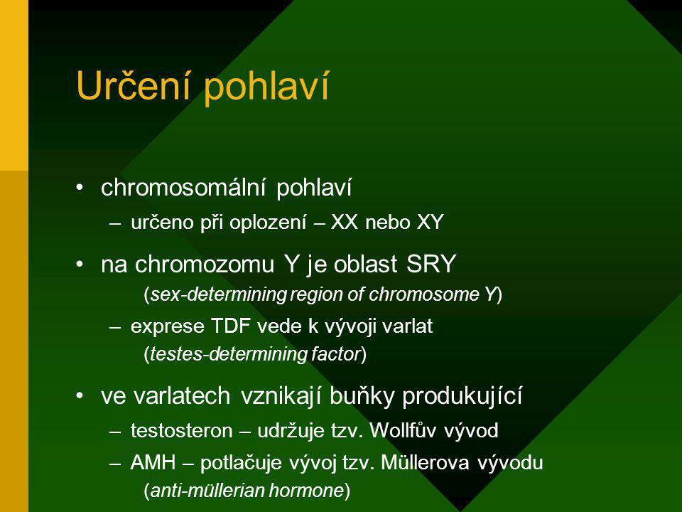 Určení pohlaví chromosomální pohlaví na chromozomu Y je oblast SRY