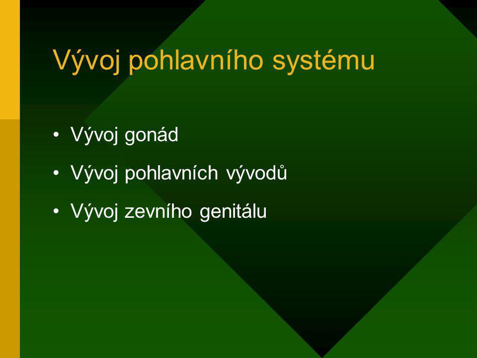 Vývoj pohlavního systému