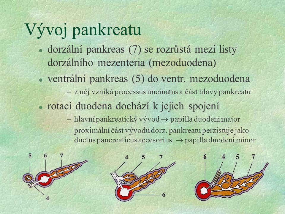 Vývoj pankreatu dorzální pankreas (7) se rozrůstá mezi listy dorzálního mezenteria (mezoduodena) ventrální pankreas (5) do ventr. mezoduodena.