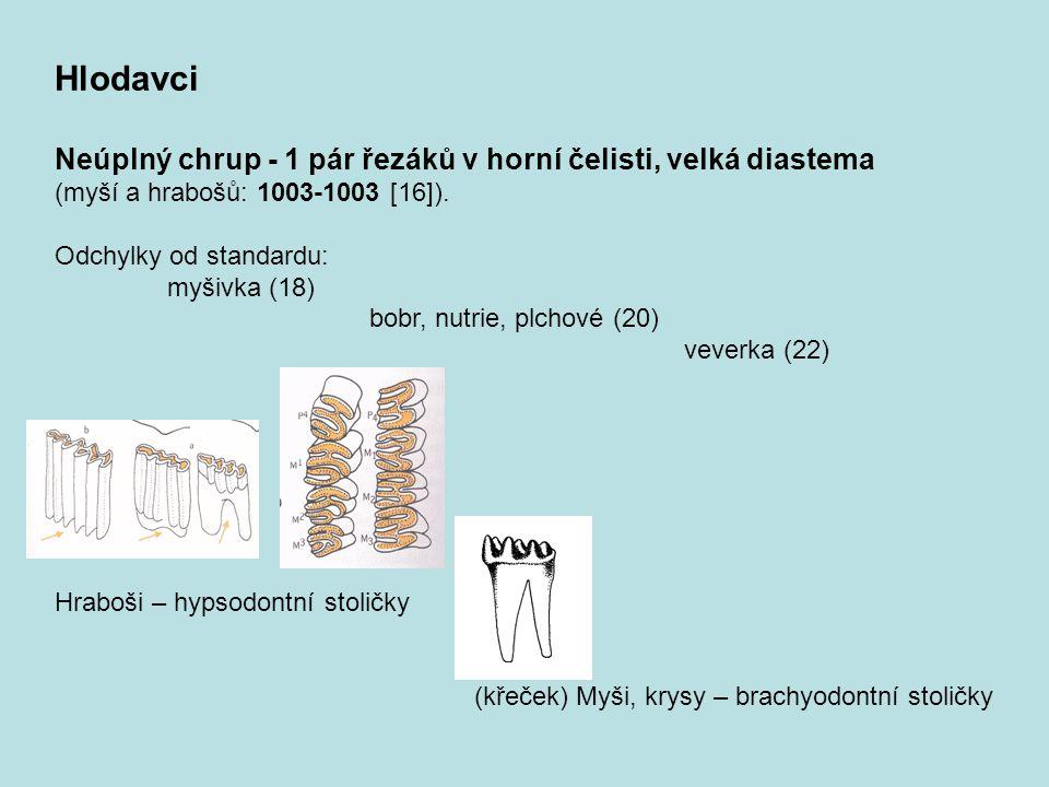 Hlodavci Neúplný chrup - 1 pár řezáků v horní čelisti, velká diastema