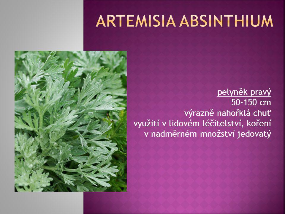 Artemisia absinthium pelyněk pravý 50-150 cm výrazně nahořklá chuť využití v lidovém léčitelství, koření v nadměrném množství jedovatý.