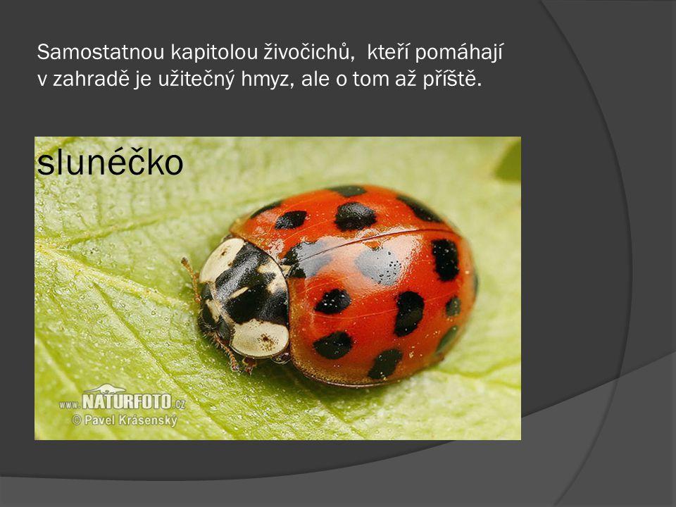 Samostatnou kapitolou živočichů, kteří pomáhají v zahradě je užitečný hmyz, ale o tom až příště.