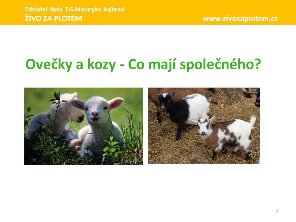 Ovečky a kozy - Co mají společného