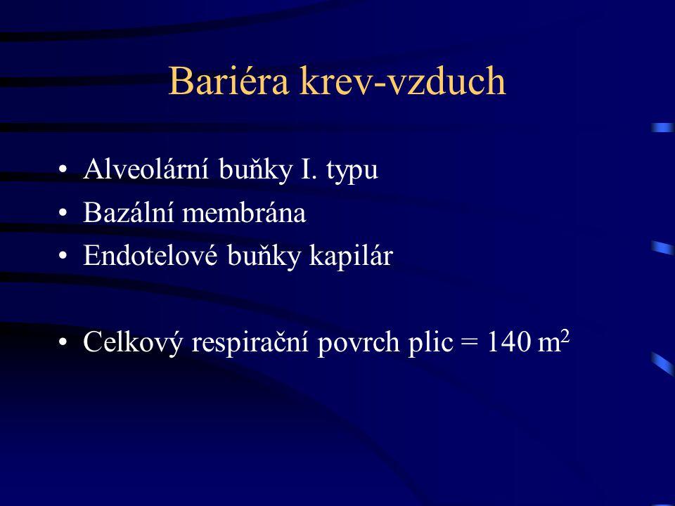 Bariéra krev-vzduch Alveolární buňky I. typu Bazální membrána